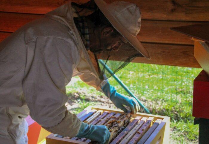 De donkere kant van de honingindustrie